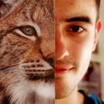 Oeil de Lynx Photo